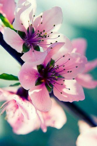 Flower Power Tattoo One Peach Blossom