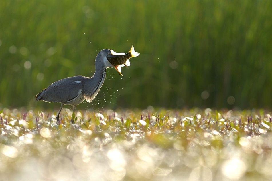The world of birds Radoslav Tsvetkov 07