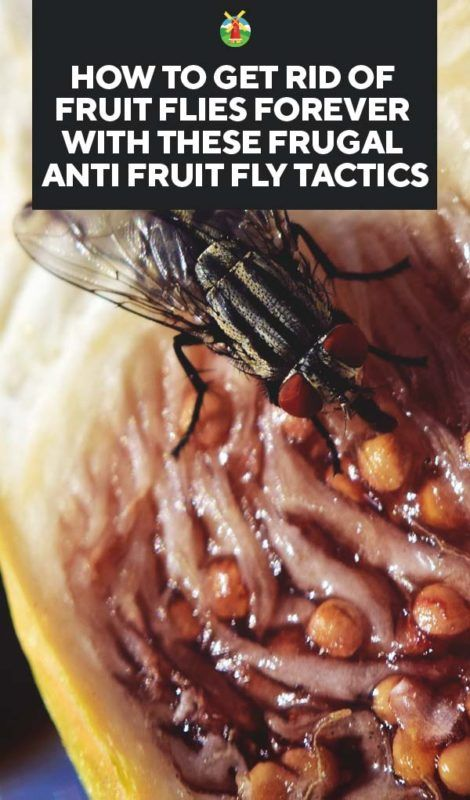 How to Get Rid of Fruit Flies Forever with These Frugal ...