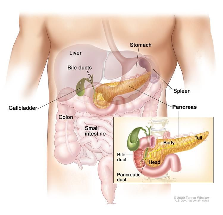 Anatomy Of The Pancreas Drawing Shows The Pancreas Stomach Spleen