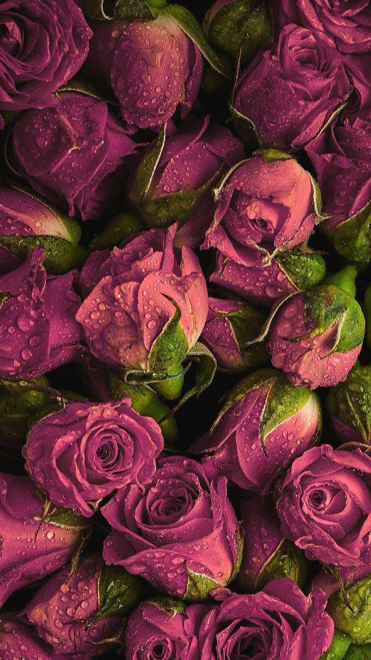 Hayvan Fotograflari Animal Wallpaper Flower Aesthetic