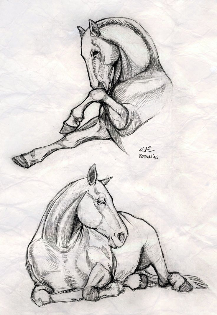Pin De Urszula Skladny En Cavalls Bocetos De Animales Anatomia Animal Dibujos De Caballos