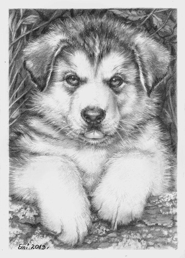 Husky Puppy By Ninsianna On Deviantart Husky Puppy Puppy Drawing Puppy Sketch