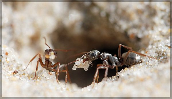 ants on the sand