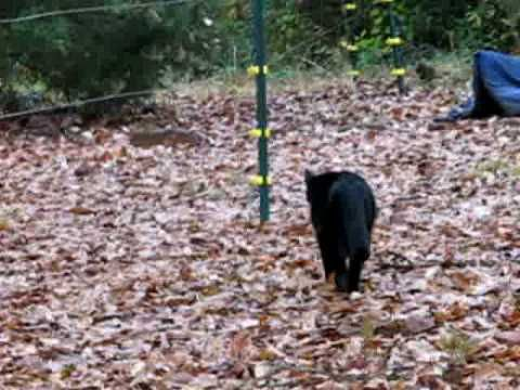 Dog Pees On Electric Fence Youtube Dog Pee Cute Animals