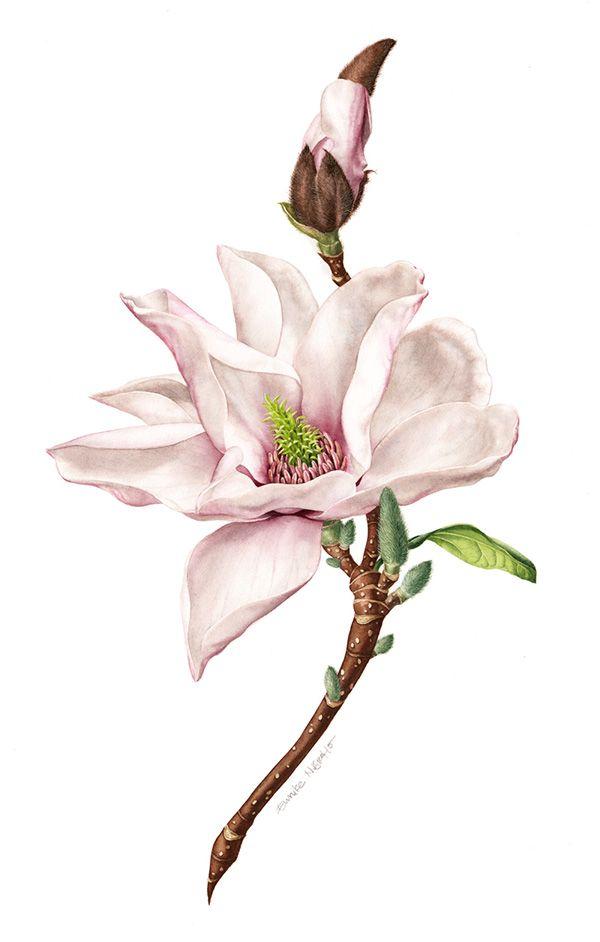 Eunike Nugroho: [Tips] Magnolia - Painting White Flowers ...