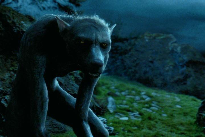 Pin Von Jess Schatz Auf Randomitude Werwolf Harry Potter Quiz Remus Lupin