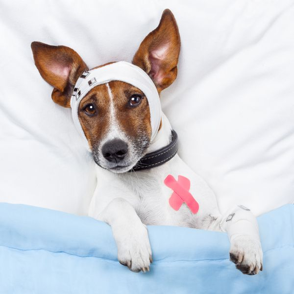 Parvo In Dogs Let S Talk Signs Symptoms And Safety Dog Pills
