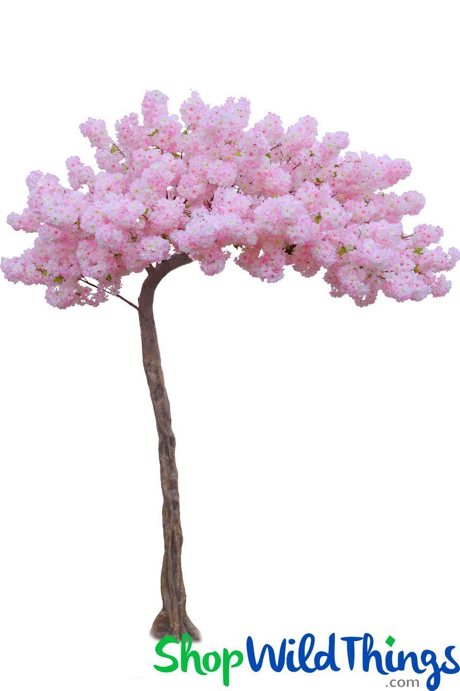Flowering Dogwood Tree Pink 11 Feet Tall x 8 Feet Wide