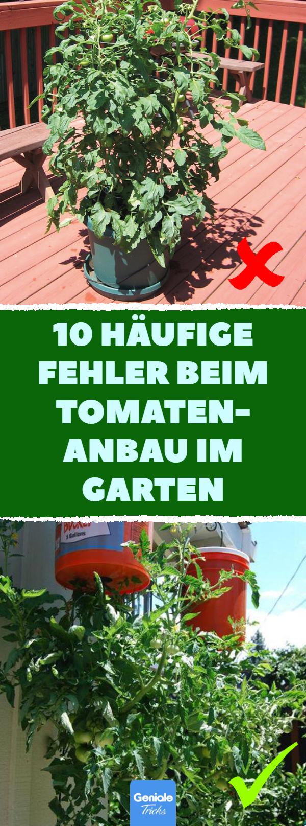 10 Haufige Fehler Beim Tomatenanbau Im Garten 10 Fehler Beim Tomaten Ziehen Und Tipps Wie S Richtig Geht Tomaten Pfla In 2020 Tomatenanbau Pflanzen Tomaten Pflanzen
