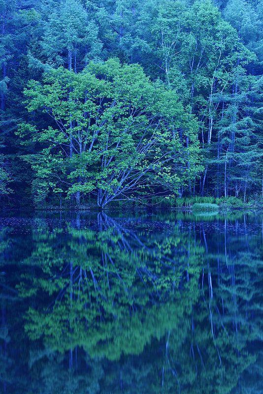 水鏡の森 I don't know what that says..but this is a gorgeous photo