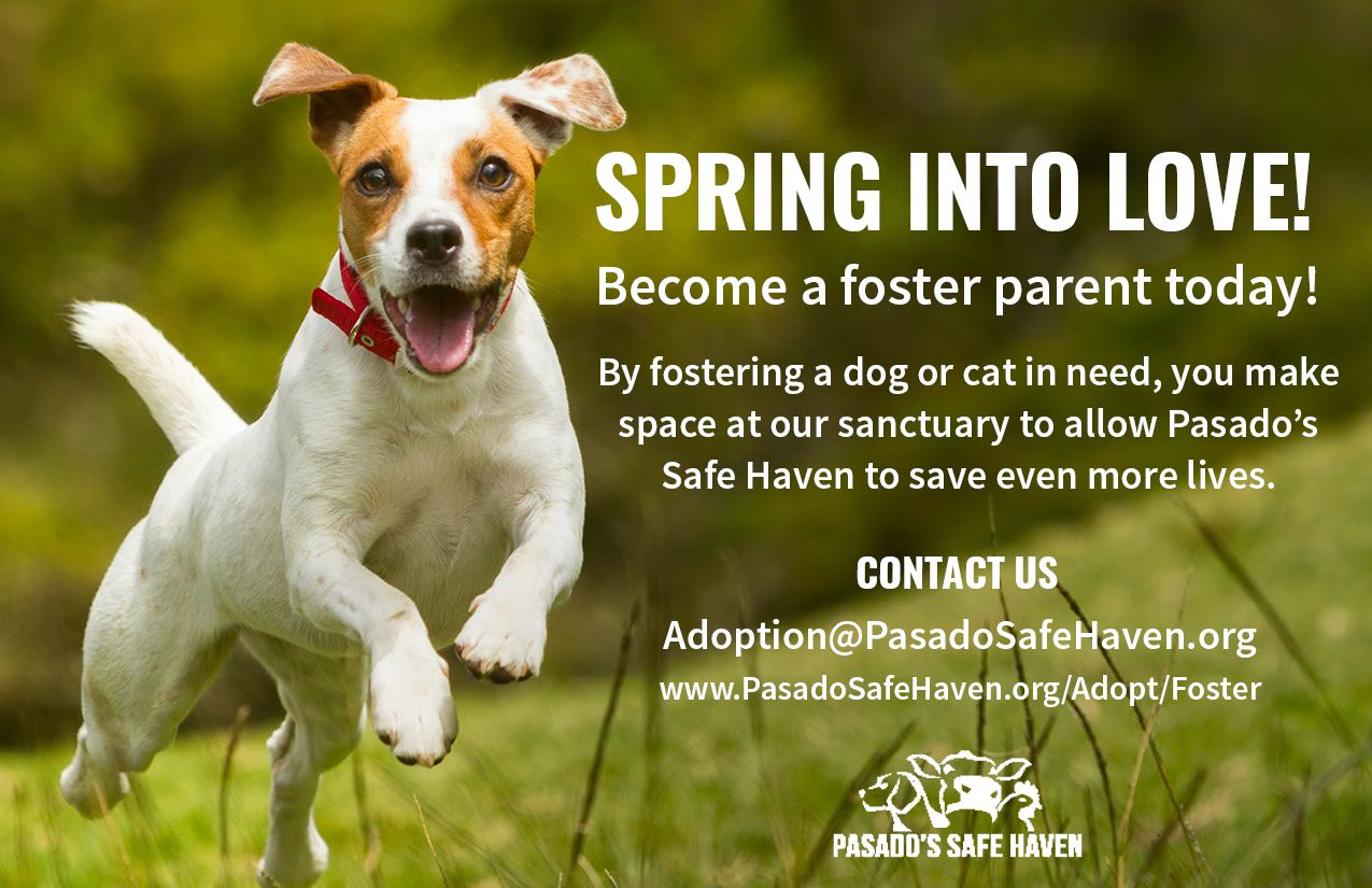 Pasado S Safe Haven Animal Sanctuary Foster Promotion The Fosters Animal Sanctuary Becoming A Foster Parent