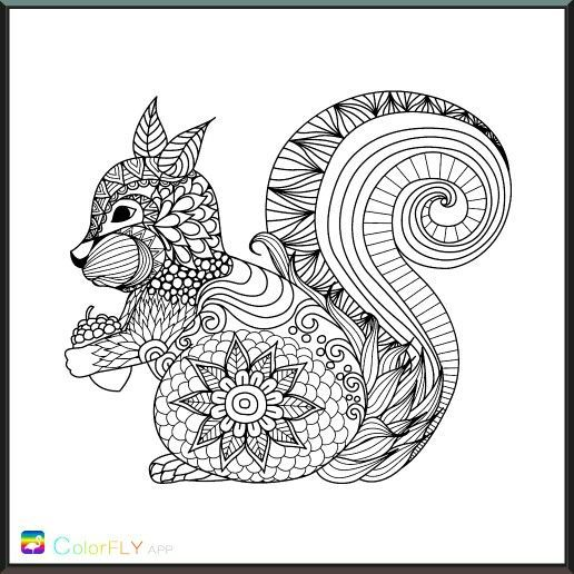 Pin By Deb Neville On Crafts Coloring Squirrel Coloring Page
