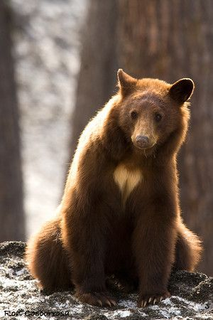 when some his or she is lookint onto some thing very suspecious and it look it can cause trouble or walking into restricted area that is how this guy look #bears
