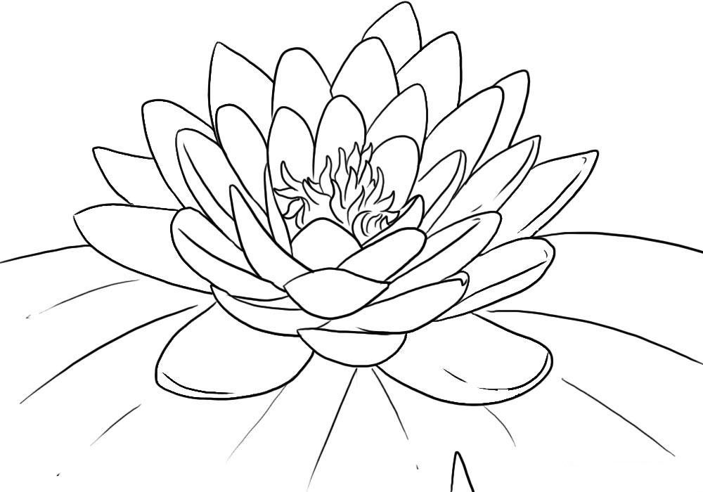 Dibujos Para Colorear Pintar E Imprimir Paginas Para Colorear De Flores Flor De Loto Dibujo Esbozar Dibujos