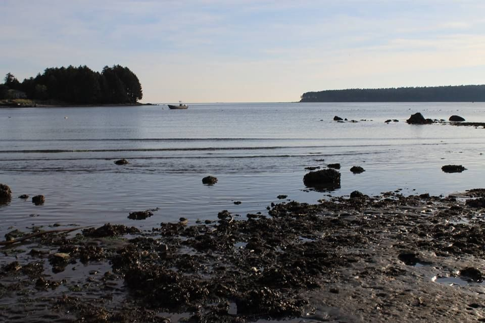 Kodiak low tide. Lola Lybreger