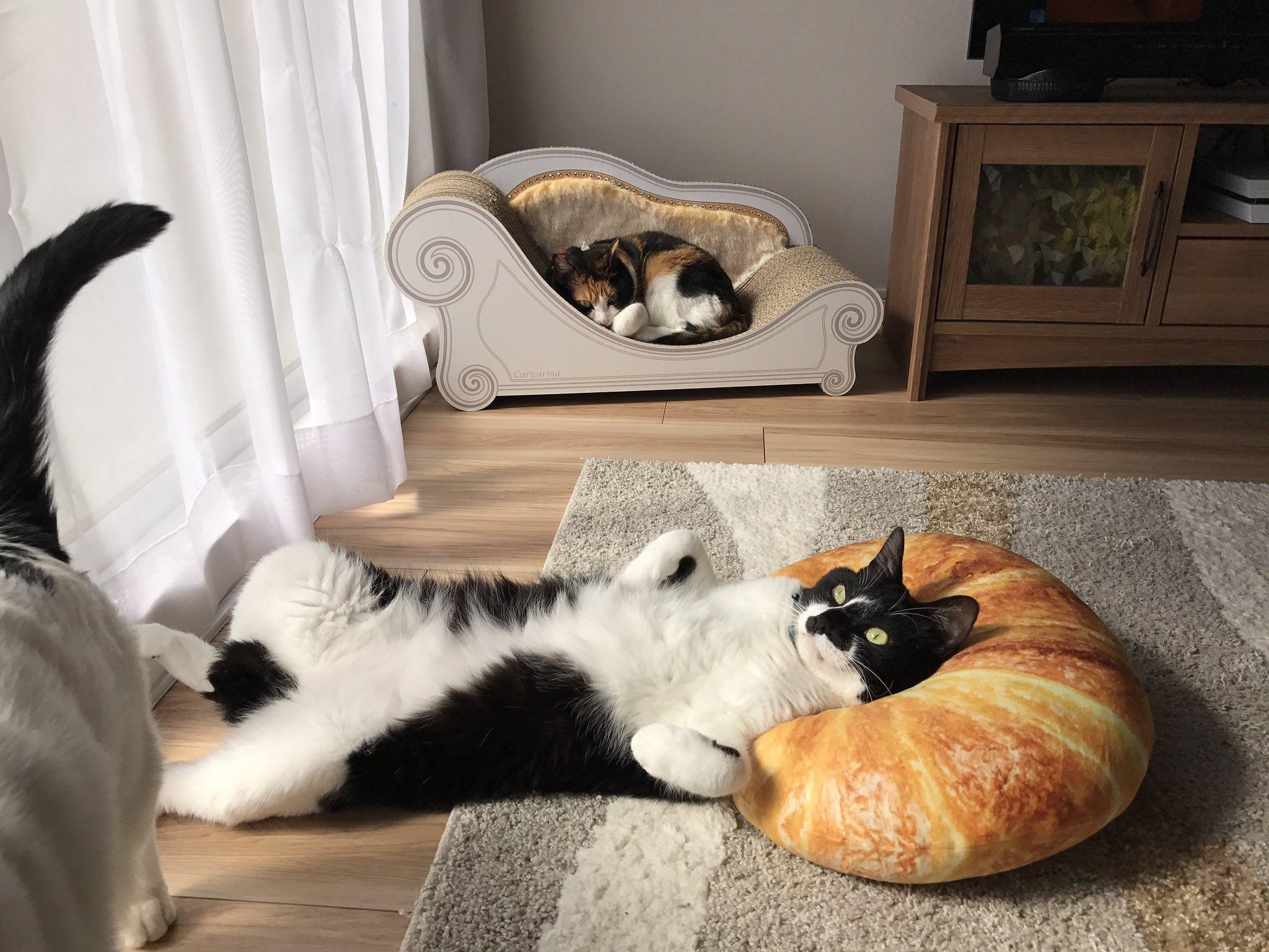 猫にクロワッサン型クッションを与えたらもう虜 美しい猫 猫 クッション ねこ