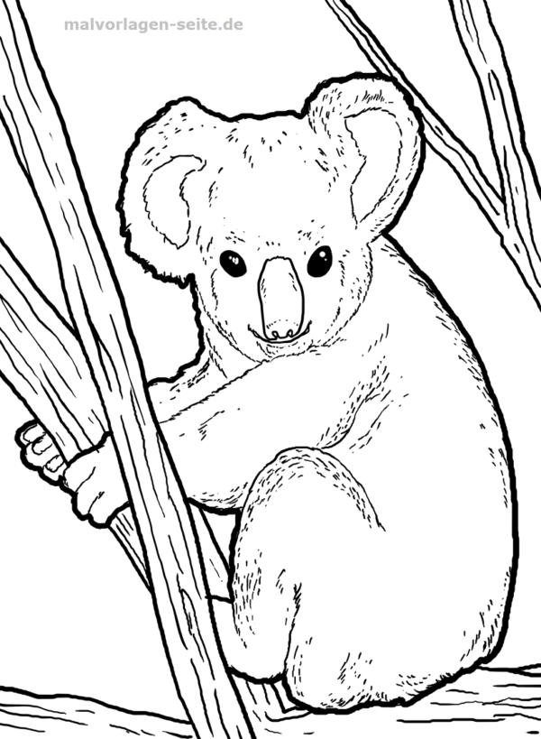 Malvorlage Koala Tiere Malvorlagen Koala Ausmalbilder