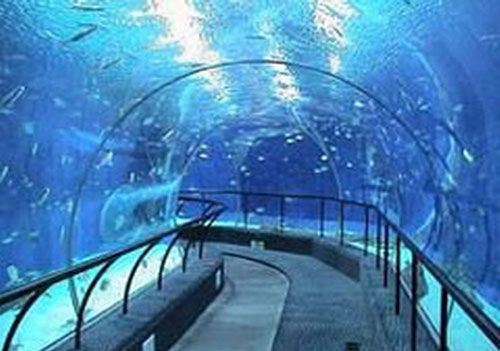 the underwater tunnel in taipingyang underwater world exhibition will become a restaurant for valentines day - Underwater World Restaurant