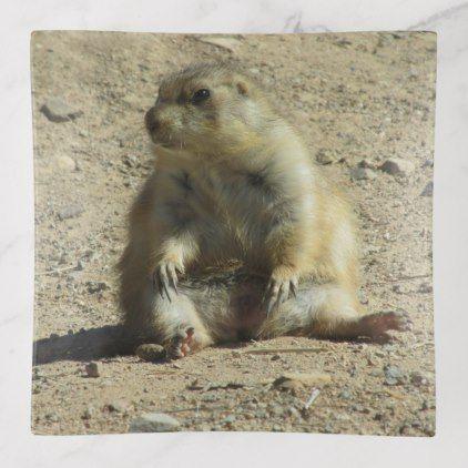 Prairie Dog Trinket Trays Photos Gifts Pinterest