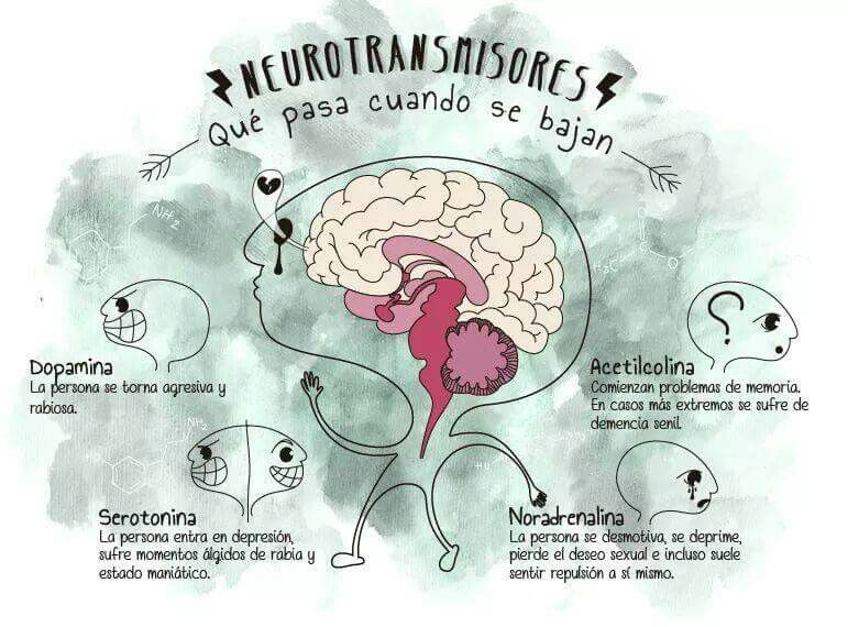 Neurotransmisores | Psicobiología, Neurociencia y educacion ...