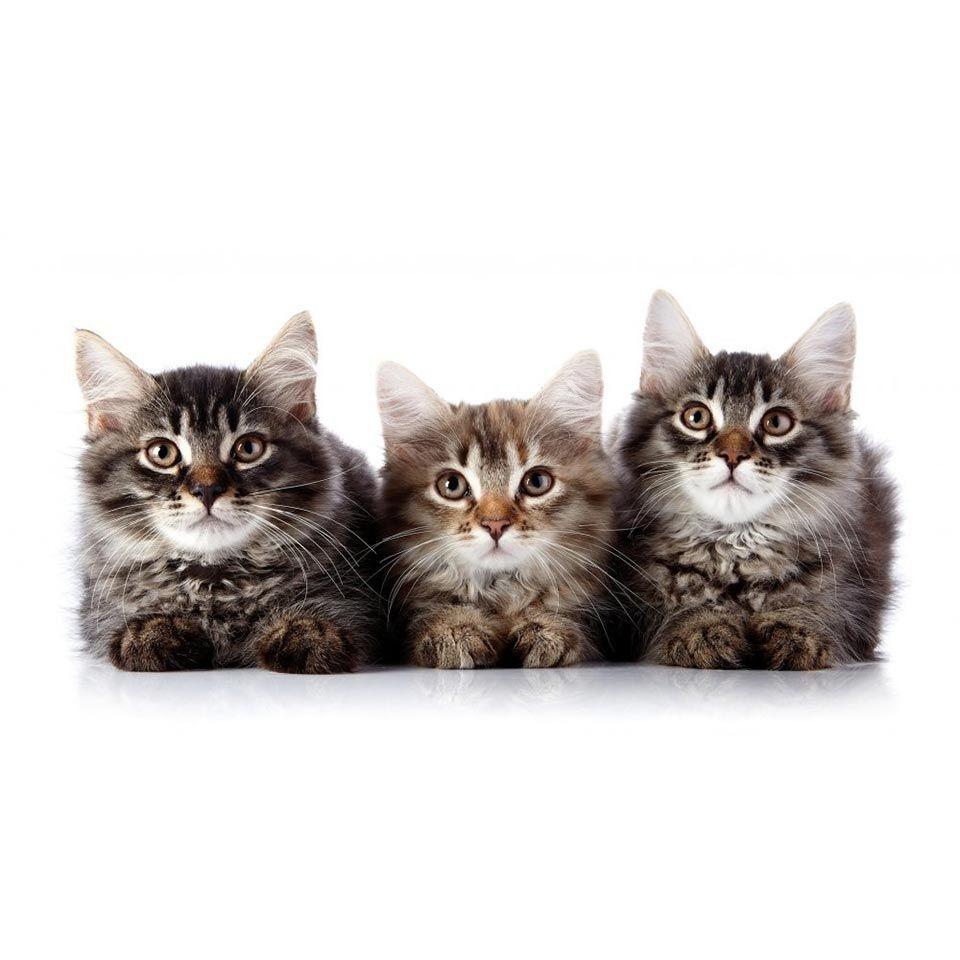 Cat Behaviour Course Learn Feline Psychology Online Centre Of Excellence In 2020 Psychology Online Feline Pet Care Business