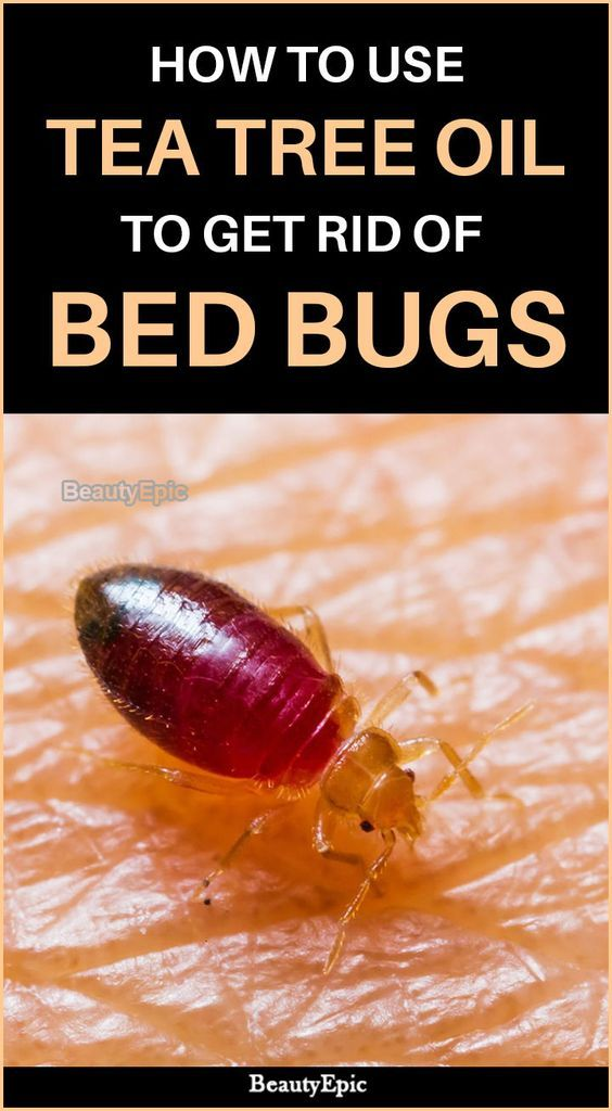 How To Get Rid Of Bed Bugs With Tea Tree Oil Bed Bugs Rid Of