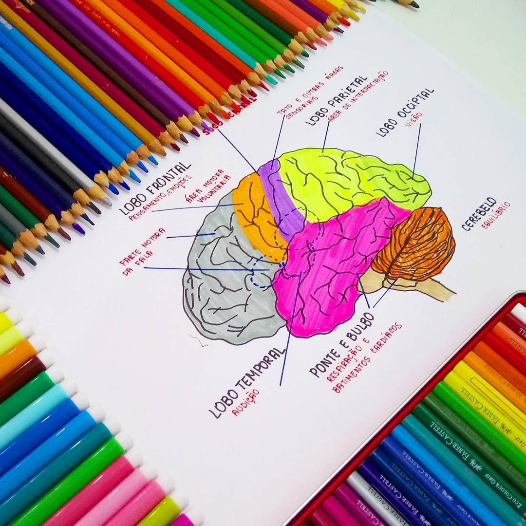 The brain. Med student study notes. // follow us @motivation2study ...