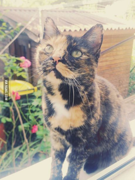 Cat with three colours means luck! :)