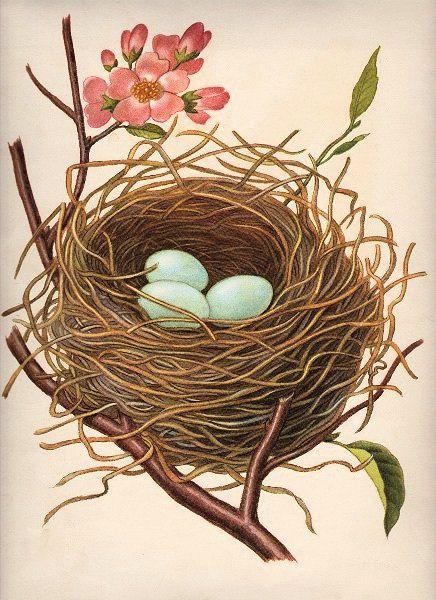 vintage vogel und nest postkarten