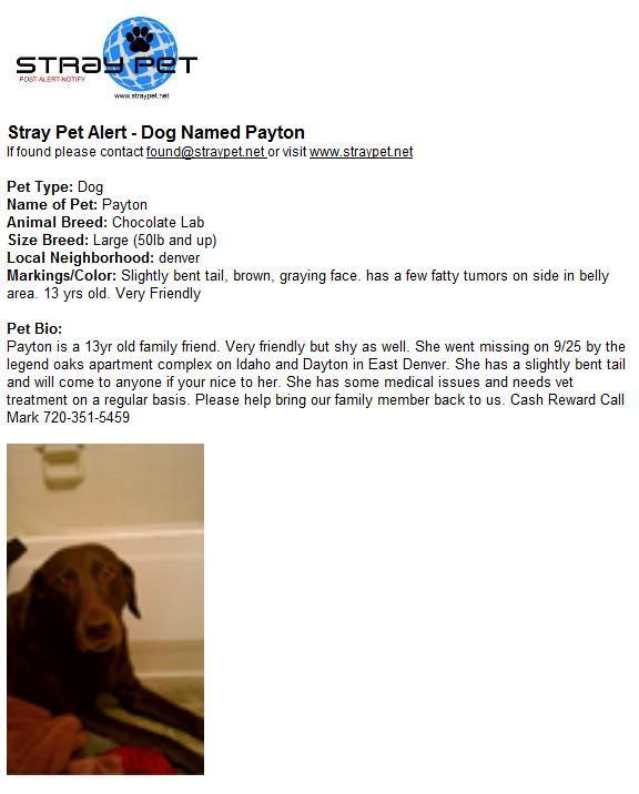 Dog Named Payton Dog Names Losing A Pet Chocolate Lab