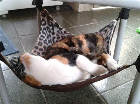 Best 5 Diy Cat Beds Cushion #catlover #cat #lover
