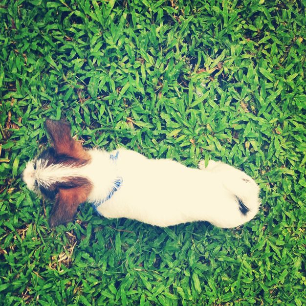 A one month old Jack Russell | Cat JL — A lifestyle blog