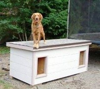 Holly (shown) & Buddy - Washington:  several years of being tried and tested, this dog house has been proven to be the most comfortable and the safest home you can build for your beloved dogs.