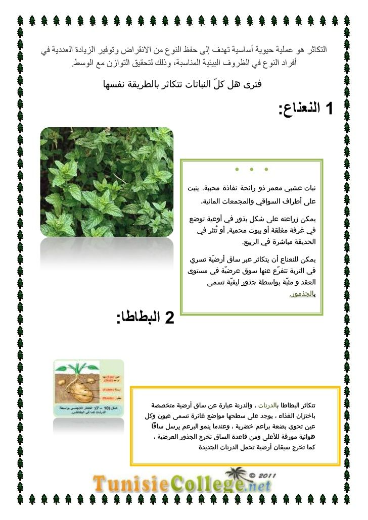 درس التكاثر عند النبات الزهري علوم الحياة و الأرض الثامنة أساسي