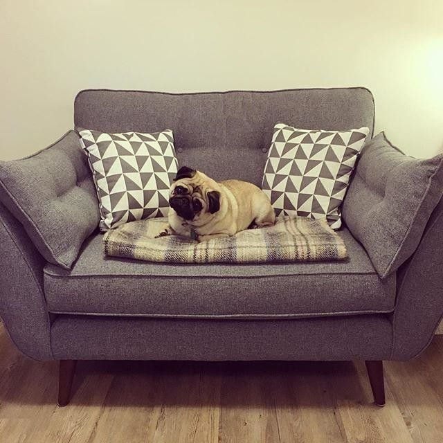 Upload And Share Pictures Of Your DFS Sofa At Home See How Make Everyday More Comfortable GalleryPage
