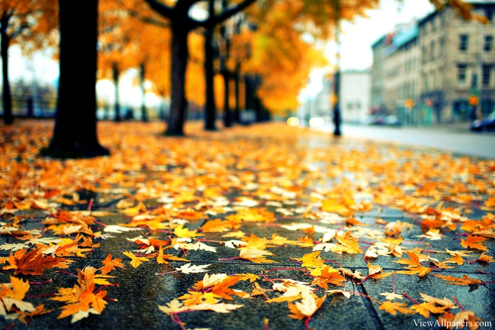 Rainy Autumn Leaves Hd Wallpapers Hd Wallpapers Rain Wallpapers Dry Leaf Desktop Wallpapers Backgrounds