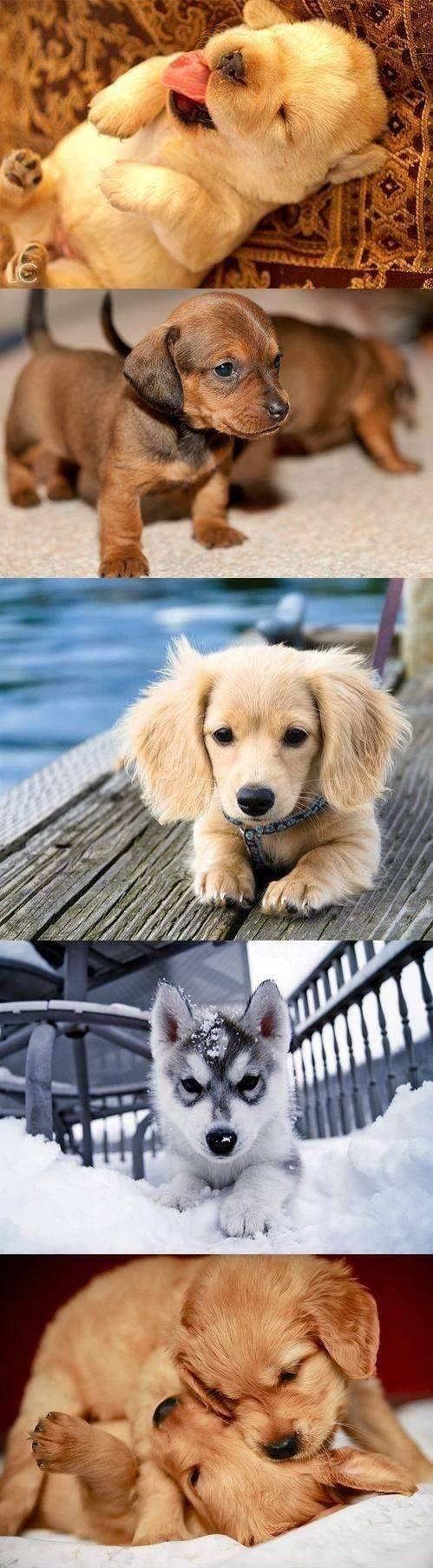 puppy montage <3