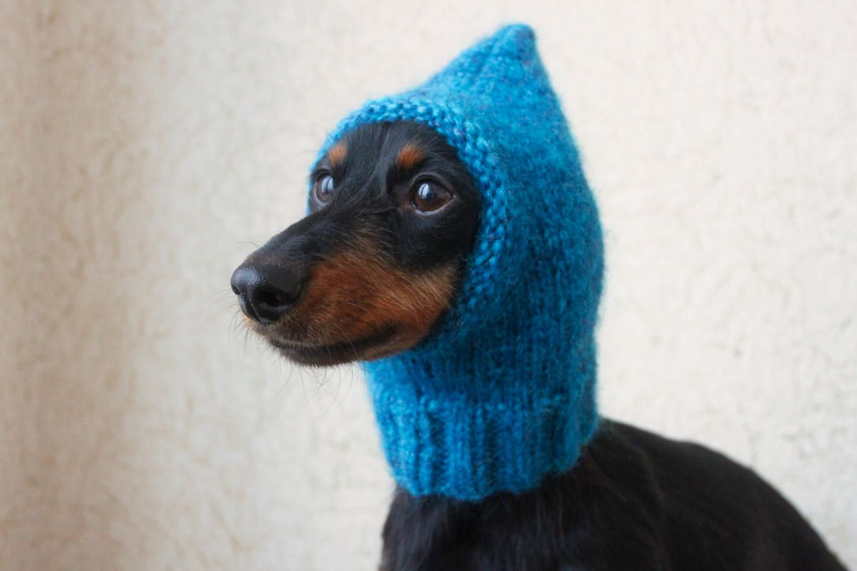 Knitting Pattern Small Dog Hat Mini Dachshund Hat Pet Clothes