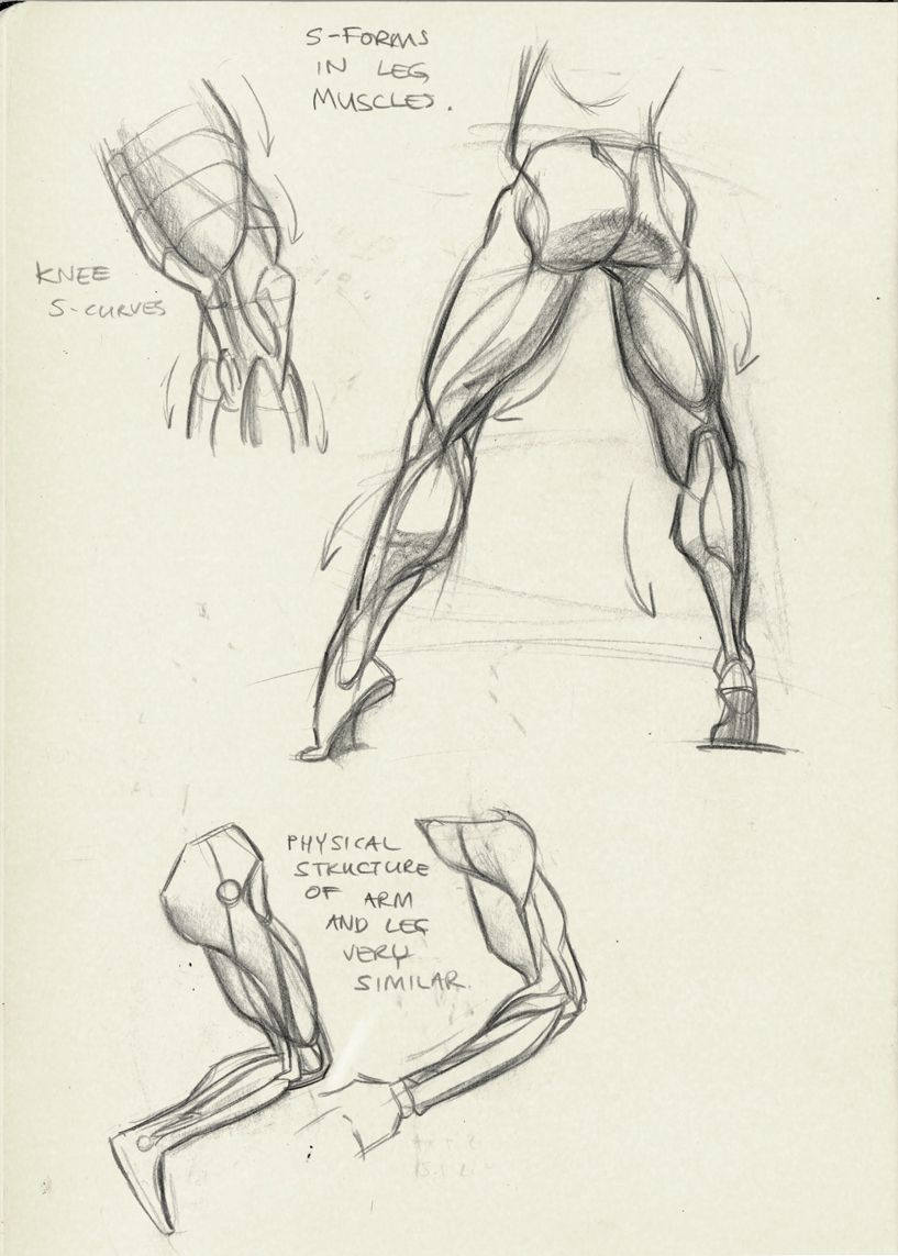 muscles of the leg in motion reference | Figure Drawing | Pinterest ...