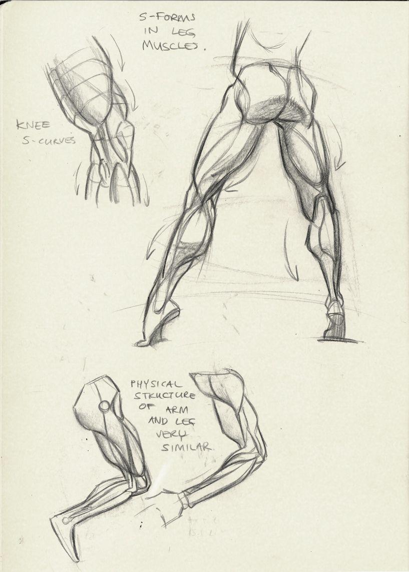 Pernas - músculos