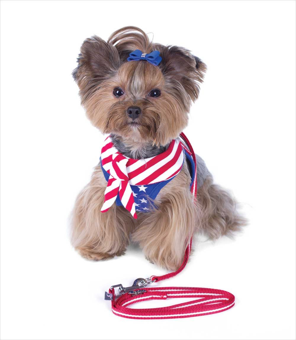 EasyGO USA Dog Harness with Leash | Dog, Yorkies and Pet care