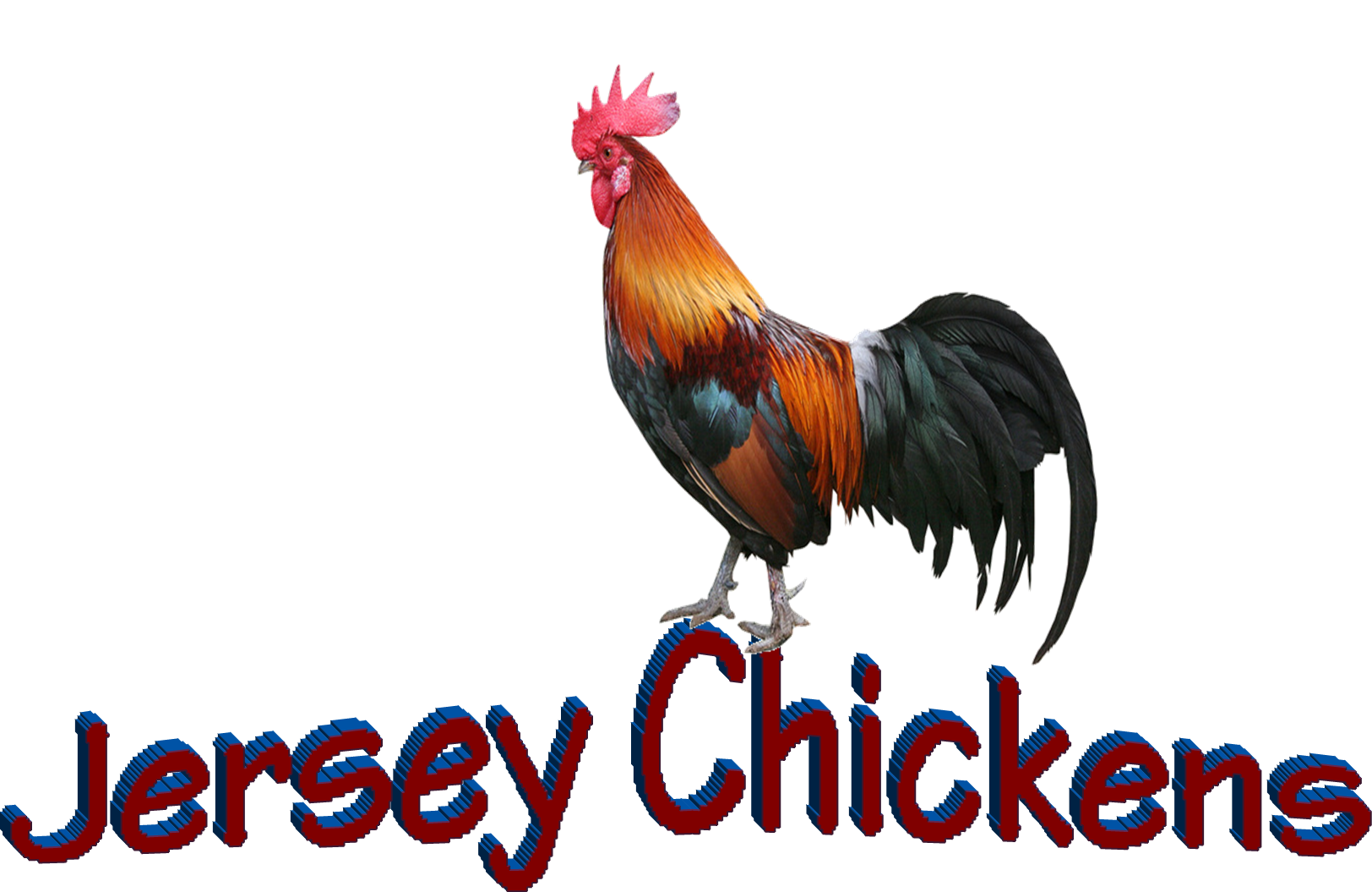 """Jersey Chickens"", where I'll be getting my first chicks this spring!"