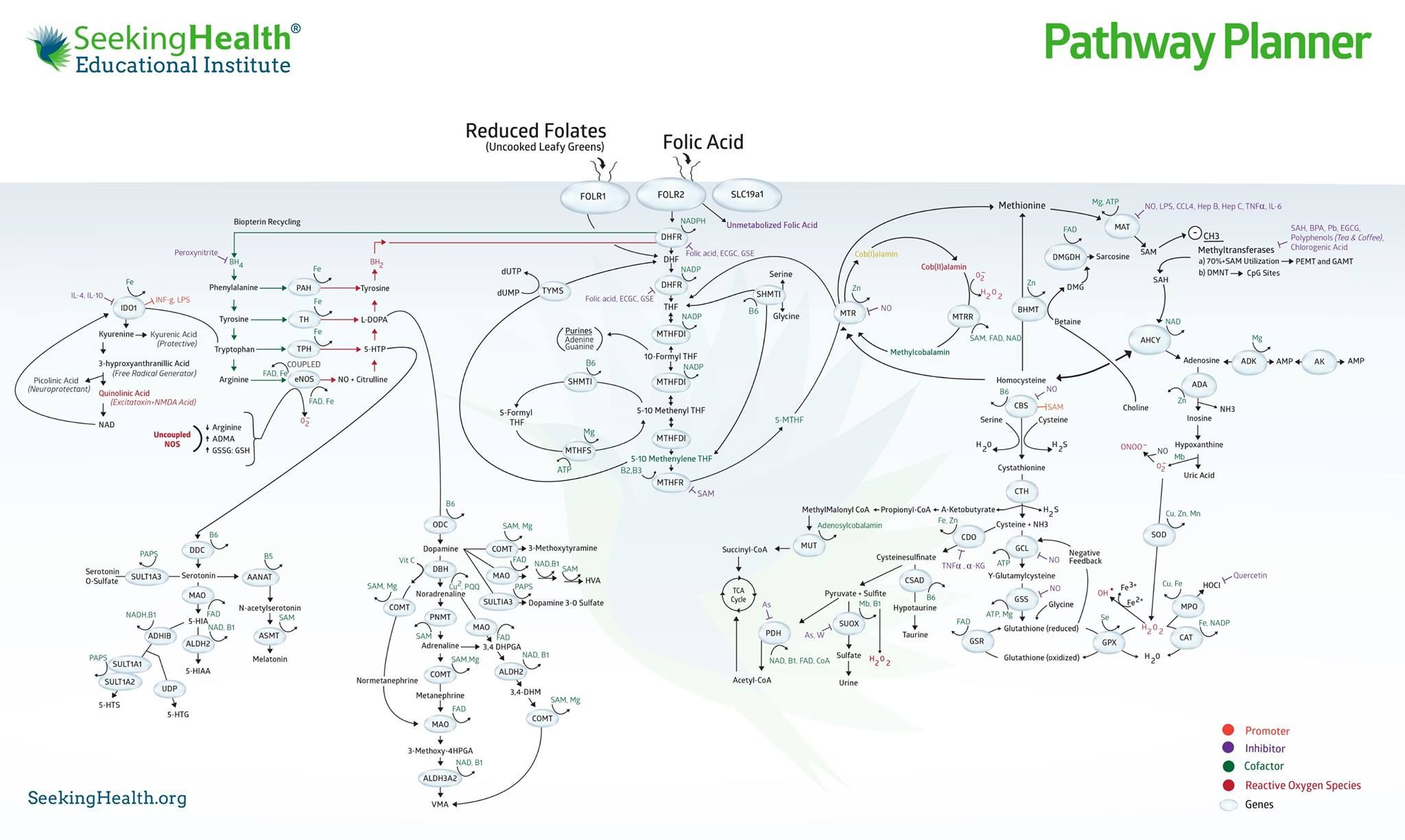 Dr Ben Lynch S Pathway Planner Just Awesome