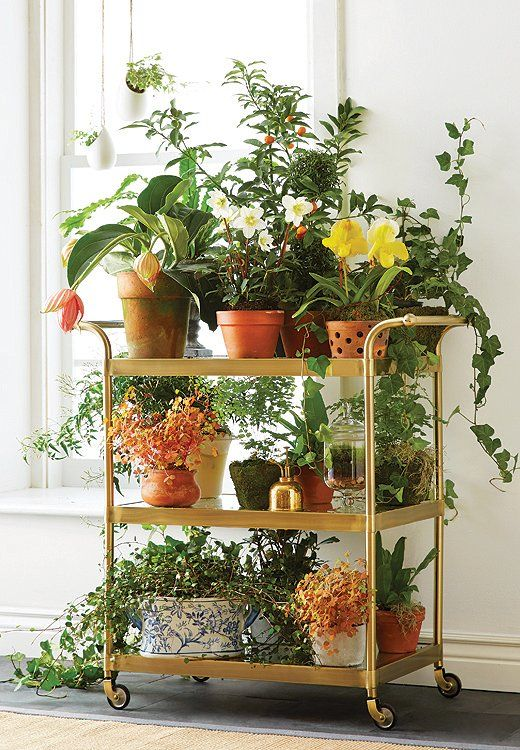 ingenious tropical foliage house plants. I want a plant cart  Ingenious Decorating Swaps Bar carts Plants and