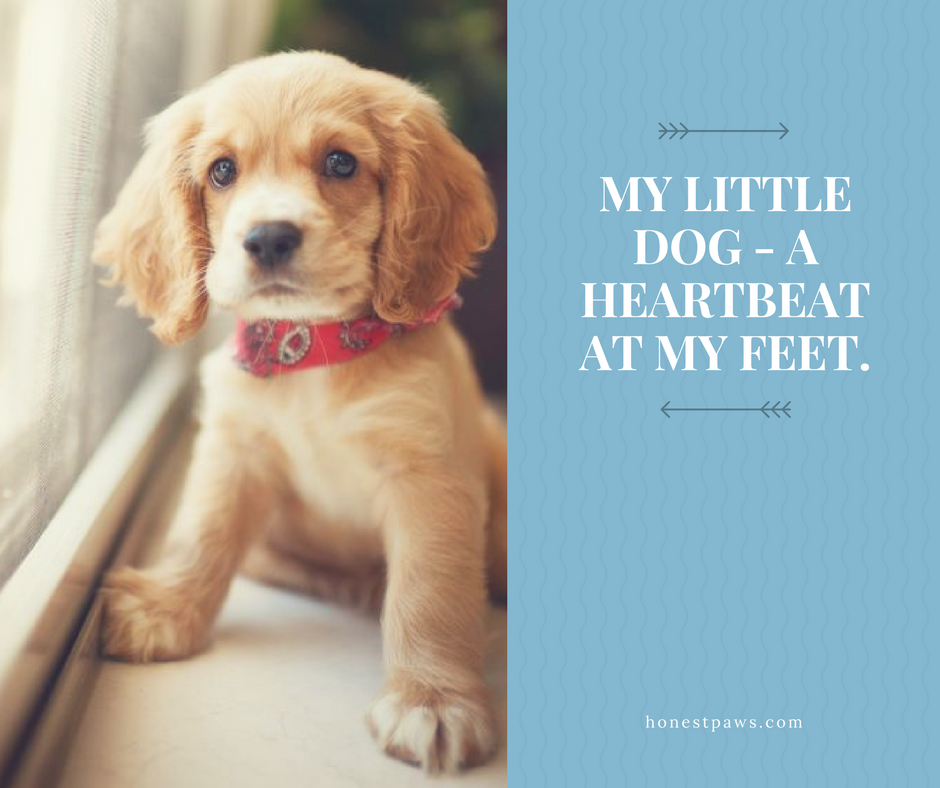 Pin by Honest Paws on Honest Paws Daily Dog Quotes | Dogs