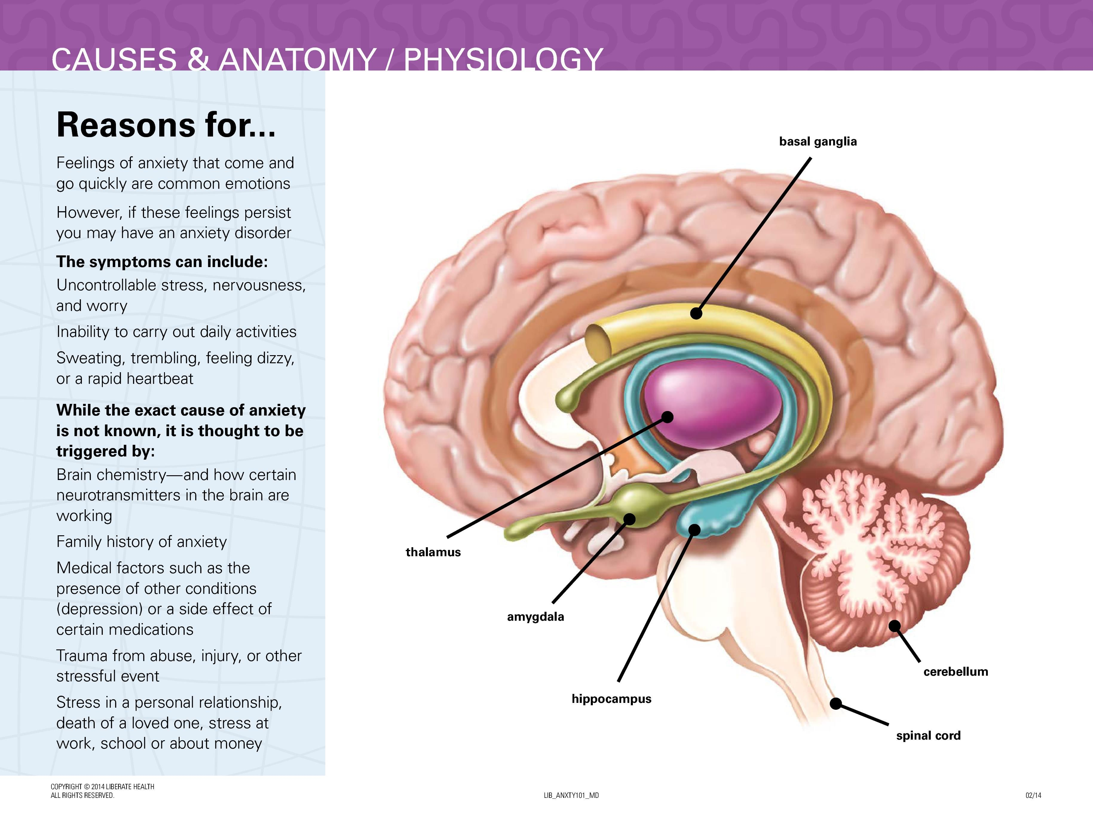 Anxiety Mini-Deck | LiberateHealth | Anatomy and Physiology | Pinterest
