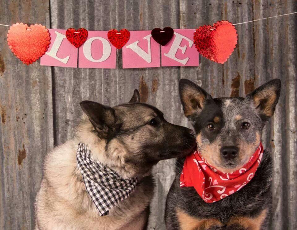 Cowboy cattle valentine love by debra klecan dog