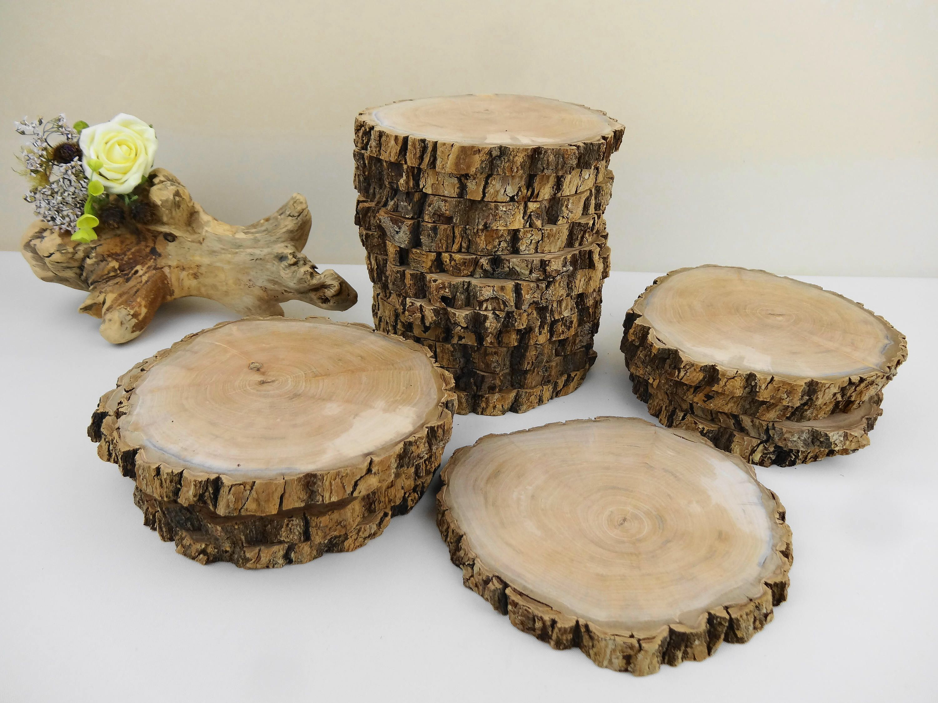 5 Wood Slices Bark Rounds Tree