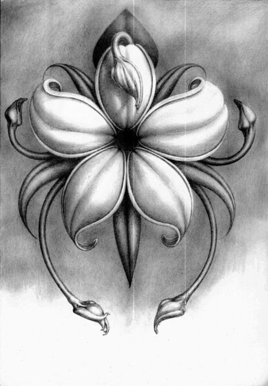A Flower Pencil Drawing
